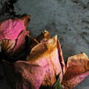 Dead Roses 1 Art Print
