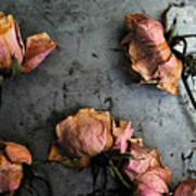 Dead Roses 4 Art Print