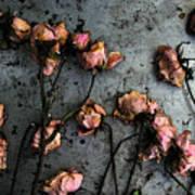 Dead Roses 5 Art Print