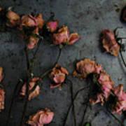 Dead Roses 6 - Photo Art Print