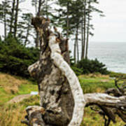 Dead Tree At Ecola Park Art Print