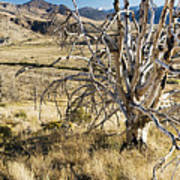 Dead Tree Panorama Art Print