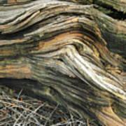 Dead Tree Textures Art Print