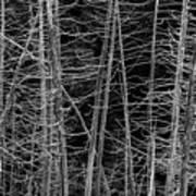 Dead Trees Art Print