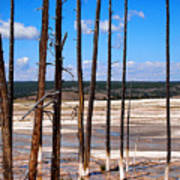 Dead Trees Standing In Hot Springs Within Yellowstone National P Art Print