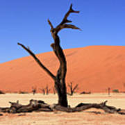 Dead Vlei Tree  Art Print by Aidan Moran