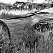 Deadwood On Cherry Creek Trail 2 Art Print