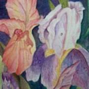 Dear Iris Art Print