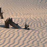 Death Valley Morning Print by Sandra Bronstein