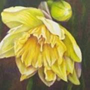 December Flower Narcissus Art Print