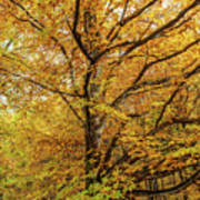 Deciduous Forest In The Autumn Art Print