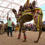 Decorated Camel Pushkar Art Print