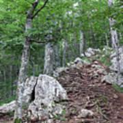 Deep Forest Rocky Path Nature Art Print