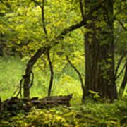 Deep Forest Scenic Art Print