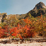Deep In Mckittrick Canyon - Lost Maples And Ponderosa Pines Against Backdrop Of Guadalupe Mountains  Art Print