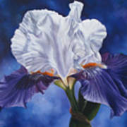 Deep Purple Dream Art Print