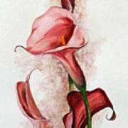 Deep Red Callas Art Print
