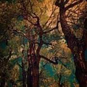 Deep Trees Art Print