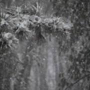 Deep Woods Snow Art Print