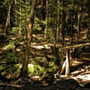 Deep Woods Trail Art Print