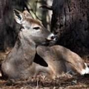 Deer 336 Art Print