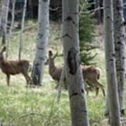 Deer And Aspen Art Print