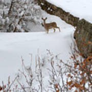 Deer At Castlewood Canyon Art Print