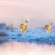 Deer At Winter Pond Art Print