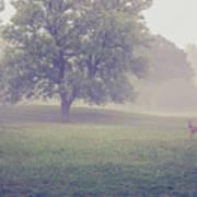 Deer By Barn On A Foggy Morning Art Print
