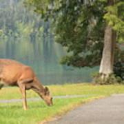 Deer By Crescent Lake Art Print