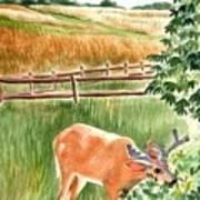 Deer Eating Leaves Art Print