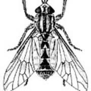Deer Fly Art Print