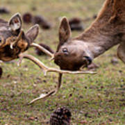 Deer Games Art Print