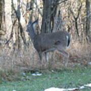 Deer Going Art Print