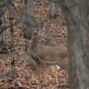 Deer Hiding In The Woods Art Print