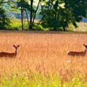 Deer In A Field Art Print