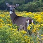 Deer In A Field Of Yellow Flowers Art Print