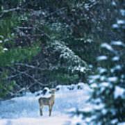 Deer In A Snowy Glade Art Print