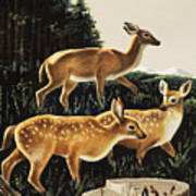 Deer In Forest Clearing Art Print