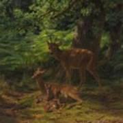 Deer In Repose Art Print