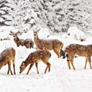Deer In The Snow 2 Art Print