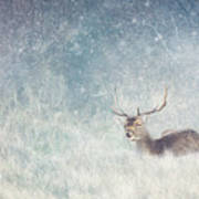 Deer In Winter Scene Art Print