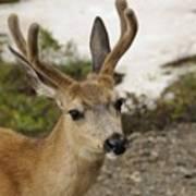 Deer Iv Art Print