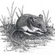 Deer Mouse Art Print