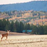 Deer Poses In The Fall Art Print