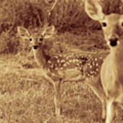 Deer Sepia V3 Art Print