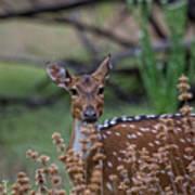 Deer V5 Art Print