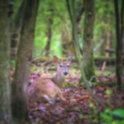 Deer1 Art Print