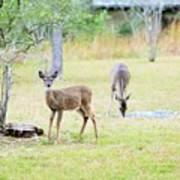 Deer18 Art Print