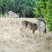 Deer24 Art Print